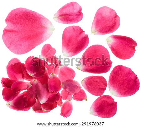â??rimson red rose petals isolated white background - stock photo