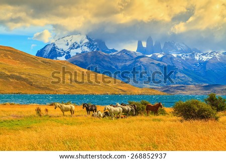 Rocks Torres del Paine visible among the clouds. Magic light of sunset. Herd of mustangs on the shore of Laguna Azul - stock photo