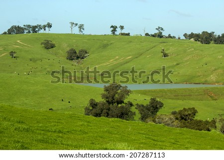 Scenic view of the   grassy  green  rural slopes of the Collie River Valley  Western Australia on a fine afternoon in  mid  winter enabling beef and sheep production to thrive. - stock photo