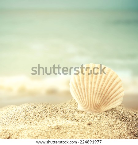 seashell on the sandy beach - stock photo
