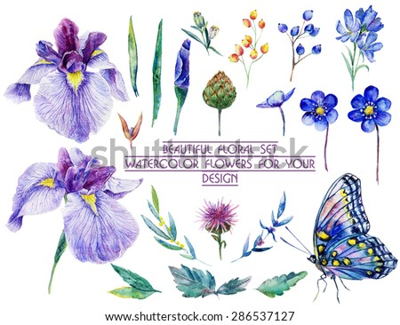 Set of different blue, lilac flowers for design. Watercolor irises, cornflower, wildflowers, leaves, berry, butterfly. Set of floral elements to create compositions.  - stock photo