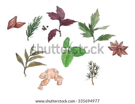 set of green stuff, spices and vegetables drawing by watercolor at white background, hand drawn illustration - stock photo
