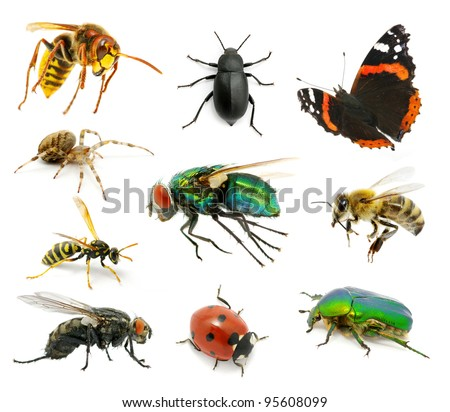 Set of insects on white - stock photo