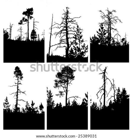 silhouettes tree on white background - stock photo