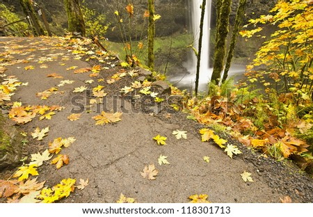 Silver Falls Sate Park at Fall Color with Trail in front of it. - stock photo