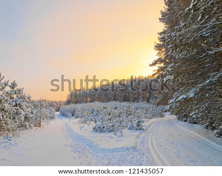 Ski track in the pine wood on a sunset in a clear weather - stock photo