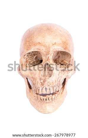 skull on a white background - stock photo