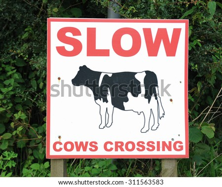 """""""Slow, Cows Crossing"""" Sign on the Side of the Road near South Molton, Devon, England, UK - stock photo"""