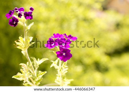 small violet flowers,purple flowers garden,drops on violet flowers,violet petals,drops on petals,amazing nature,spring flowers,forest flowers,summer,cute,lovely,flowers spring,garden flowers,purple - stock photo