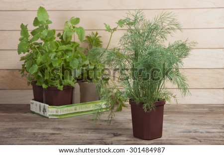 Spicy plants in pots and fennel in the foreground. - stock photo