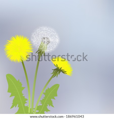 Spring dandelion flowers with leaves on a gray background. - stock photo