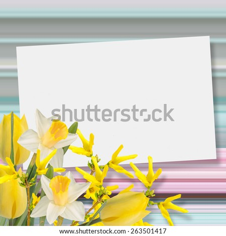 Spring flowers daffodils, tulips against abstract striped background. Place for text. Abstract background for design. - stock photo