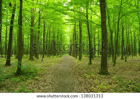 spring green forest - stock photo