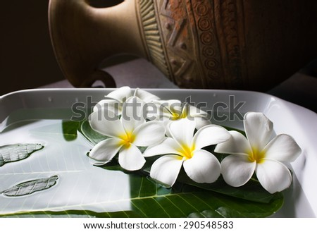 (still life art corner) plumeria flowers decorated on green leaf and water  - stock photo