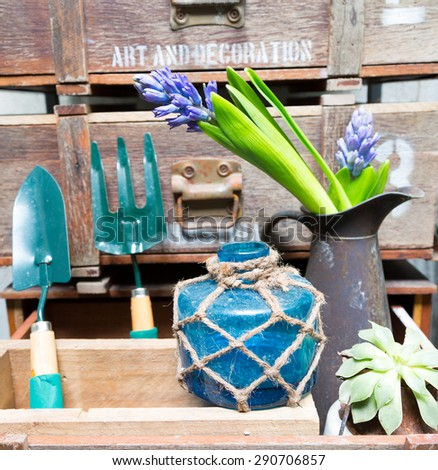 still life with Hyacinth in vintage cabinet wood at rustic interior at houseplant  - stock photo