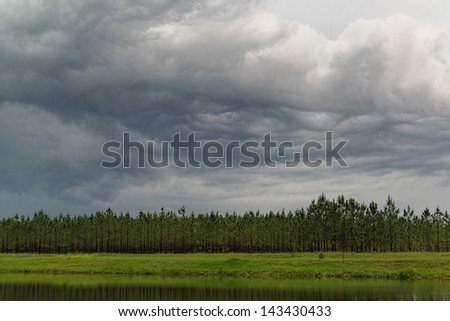 """Storm over Pines."" - stock photo"
