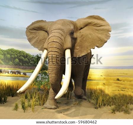 stuffed African  Elephant - stock photo