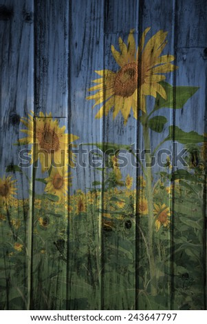 """sunflower field in Thailand"" The wood painting concept - stock photo"
