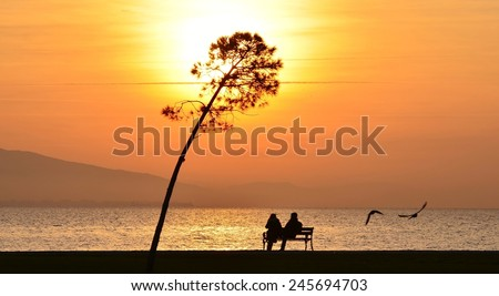 Sunset on sea and tree, people sitting on a bench under sunset, young couple sitting on a bench under sunset    - stock photo