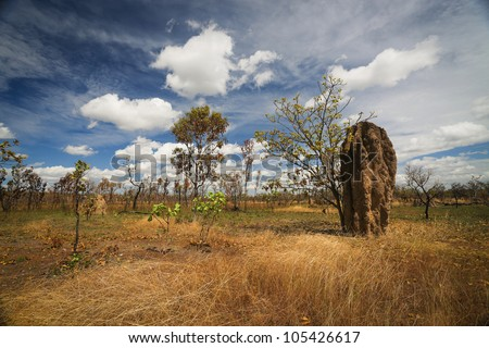 Termite mounds (Nasutitermes triodae), Kakadu National Park, Australia - stock photo