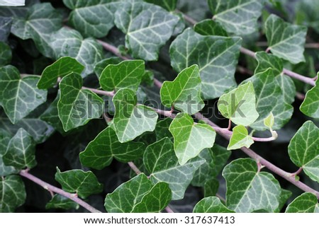 Texture or background of leaves - stock photo