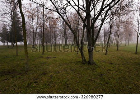 the city park in autumn season photographed in the morning - stock photo