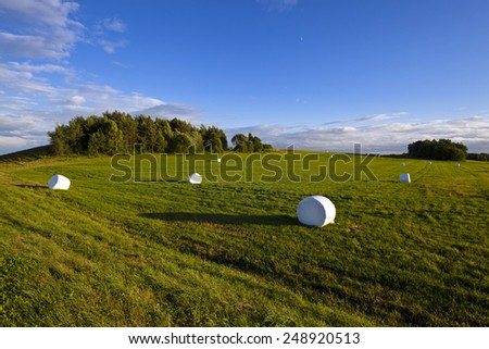 the grass packed into bales for feeding animal in a winter season - stock photo