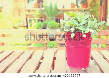 The plant in the pot on the table with blur outdoor background processed in vintage style with yellow color of sunlight on the left side. Selective focus on the pot - stock photo