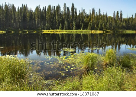The silent mountain lake surrounded by fur-trees and bushes in the autumn - stock photo