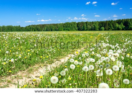 the spring  landscape with a blossoming meadow, the road and the blue sky - stock photo
