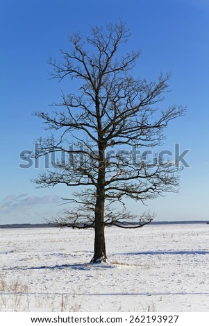 the trees covered with snow, growing in a winter season - stock photo