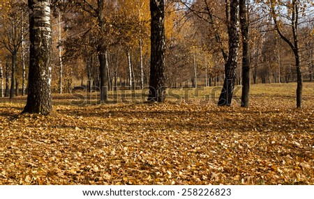 the trees photographed in autumn time - stock photo