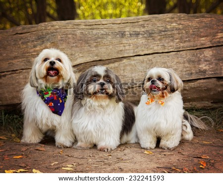 three white mixed breed dog at a public nature park  - stock photo