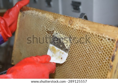 tool for opening honeycombs - stock photo