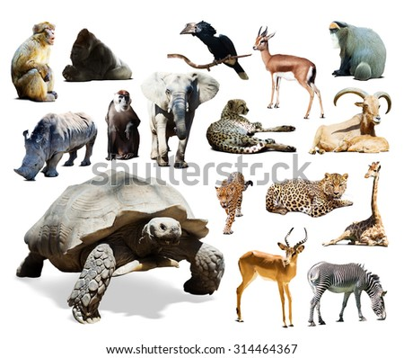 tortoise and other African animals. Isolated over white background  - stock photo