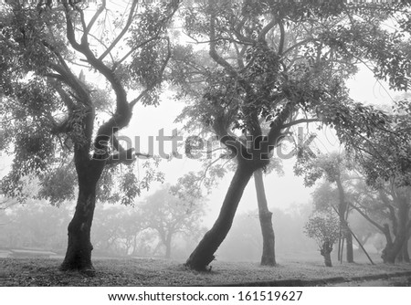 Tree In a fog covered field, mist.  - stock photo