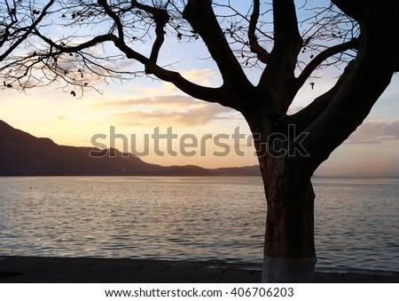 Tree on Coastline at Sunset - stock photo