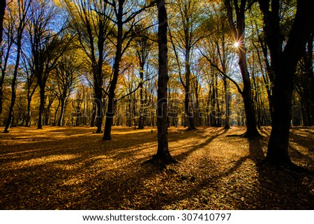 tree shadows in mountain forest with sunbeams. Sunset Sunrise In Atumn Coniferous Forest Trees. Nature Woods. HDR Sun's rays make their way through the trunks of trees in a pine forest. - stock photo