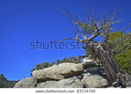"""""""Tree Top San Jacinto""""   A bare tree on top of a mountain in San Jacinto State Park near Palm Springs, California. - stock photo"""