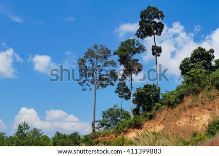 trees and blue sky - stock photo