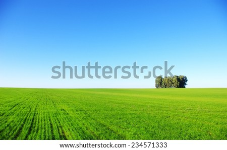 trees in a wheat field at Portugal.  - stock photo