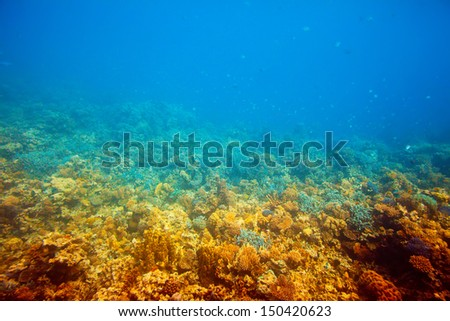 tropical fishes in Red sea water  - stock photo
