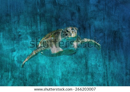 """""""turtle on coral reef"""" Mural. The cement painting concept - stock photo"""