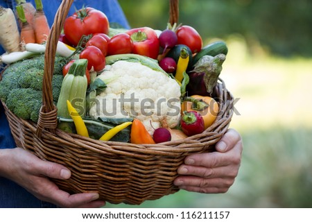 Vegetables in hands - stock photo