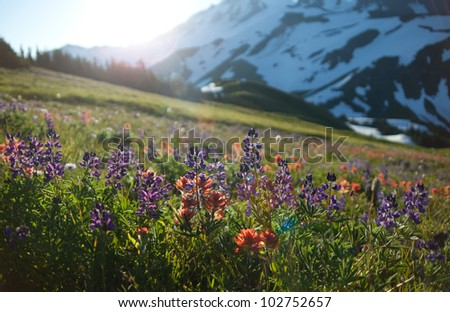 View of Mount Baker, Mount Baker National Forest, WA - stock photo