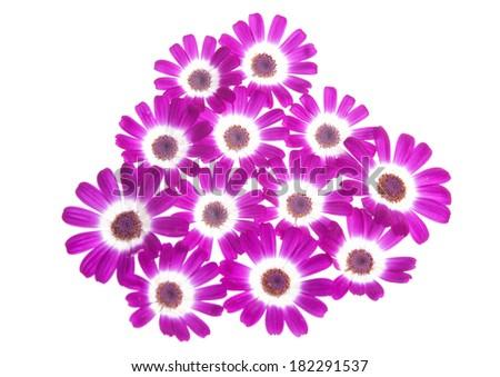 violet flowers - stock photo