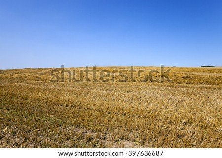wheat field at which the harvest. Blue sky. - stock photo