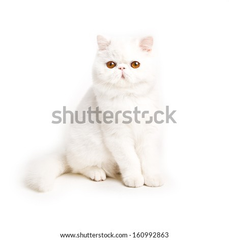 white cat - little kitty   isolated on white background - stock photo