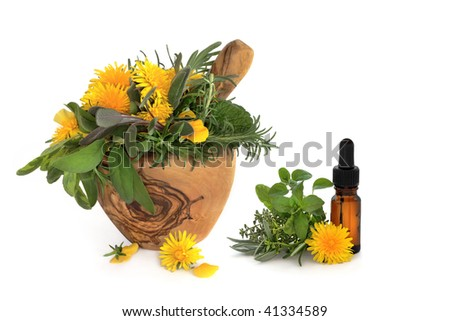 Wild dandelion and gorse flowers with sage, rosemary and lemon balm herbs, in an olive wood mortar with pestle and aromatherapy essential oil glass bottle, over white background. - stock photo