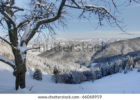 winter at Black Forest, Germany - stock photo